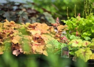 Tumalo Garden Club