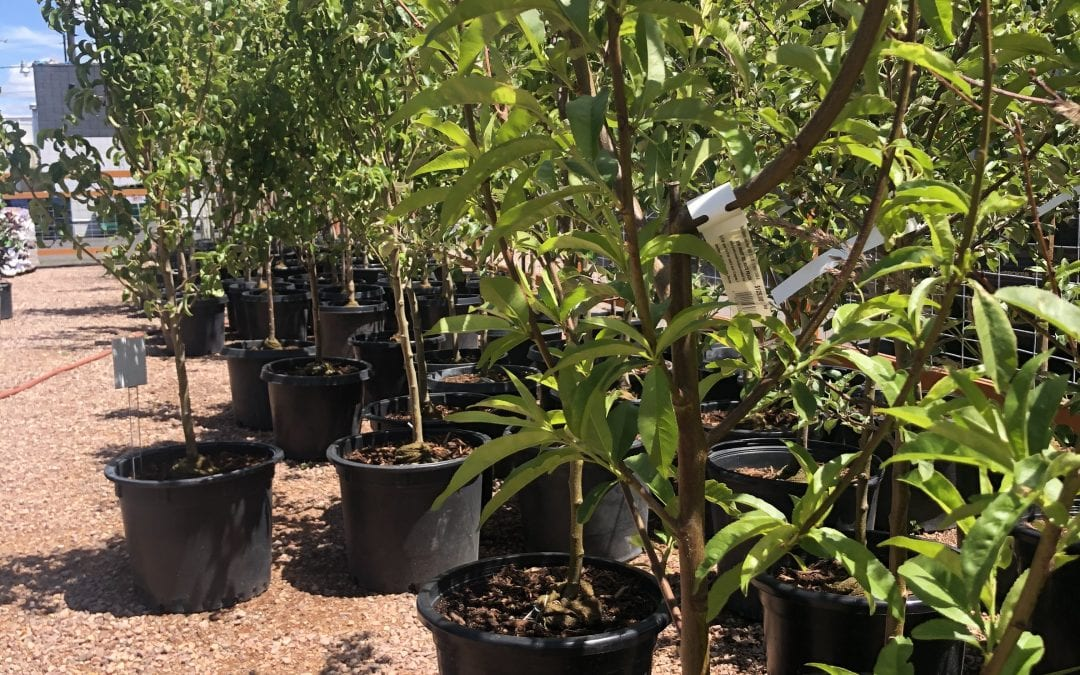Take 25% Off Our Deciduous Trees