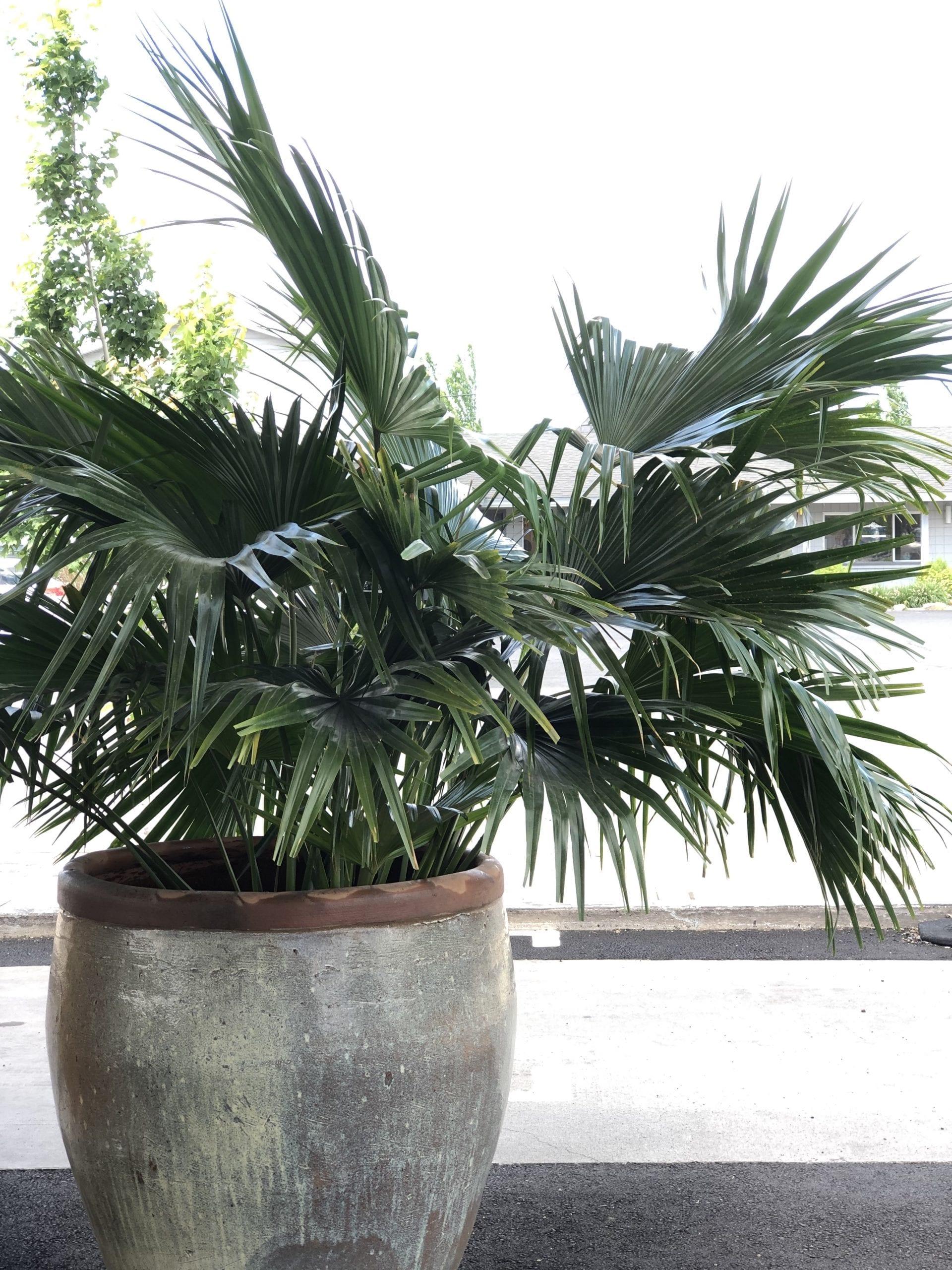 Earth's art indoor plants